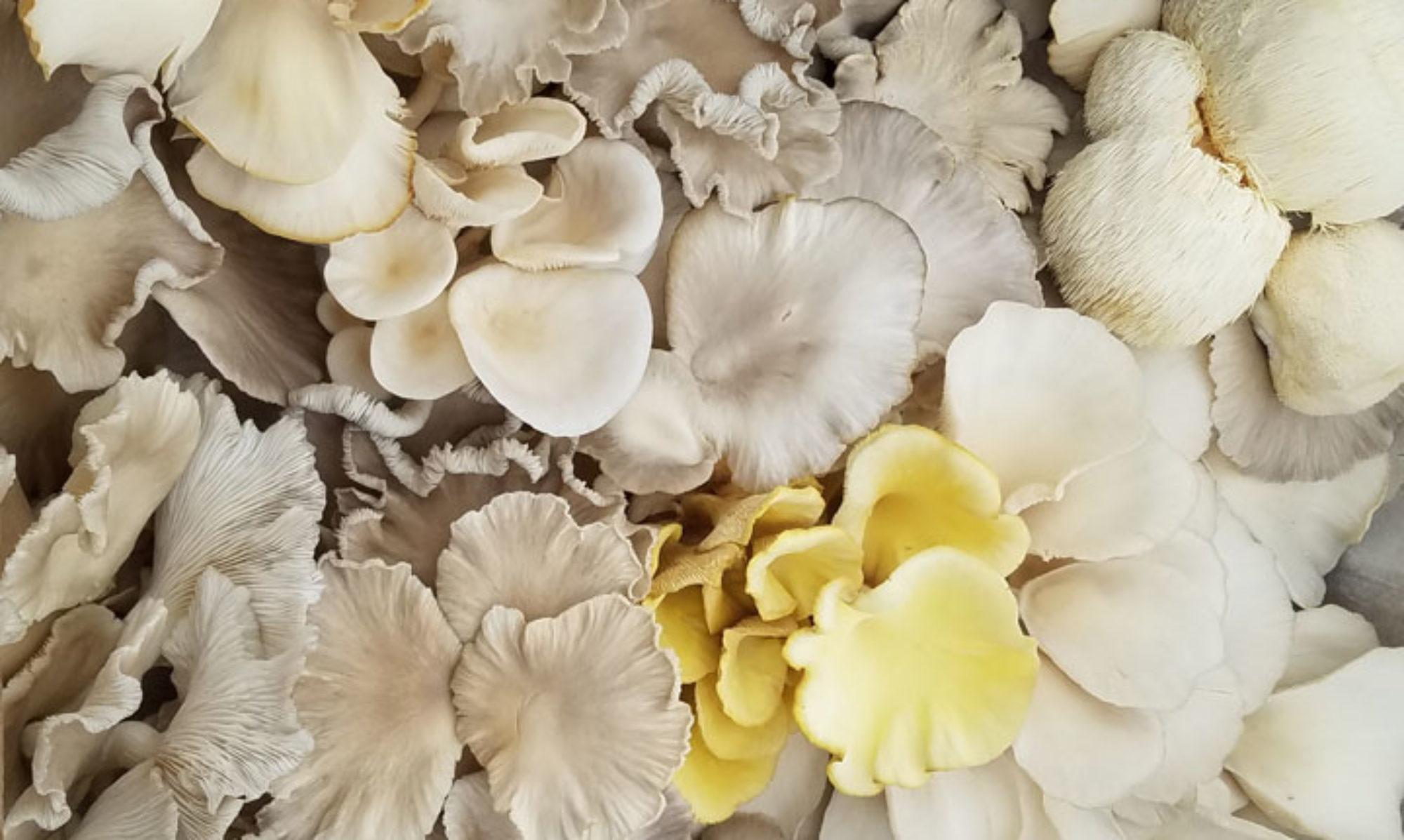 Gnome Grown Mushrooms